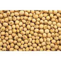 Organic Soybean Manufacturers