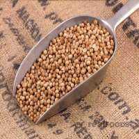 Organic Coriander Seed Manufacturers