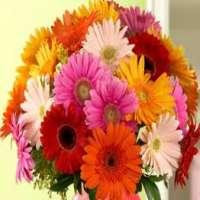 Gerbera Flower Manufacturers