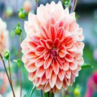 Summer Flower Manufacturers