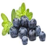 蓝莓味 制造商