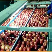 Fruits Storage Services Manufacturers