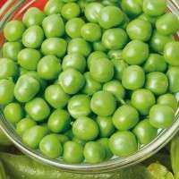 豌豆种子 制造商