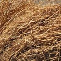 Vetiver Root Manufacturers