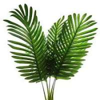 Palm Leaves Manufacturers