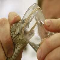 蛇毒 制造商
