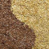 农业种子 制造商