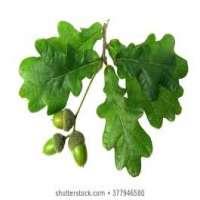 Oak Leaf Manufacturers