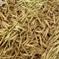 Bamboo Seeds Importers
