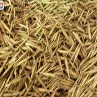 竹子种子 制造商