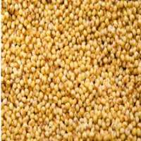 Foxtail Millet Importers