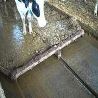 Cow Dung Floor Scraper Manufacturers