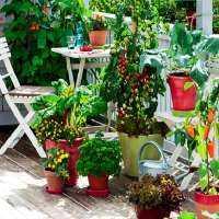 Kitchen Gardening Manufacturers