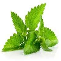 Spearmint Leaf Manufacturers