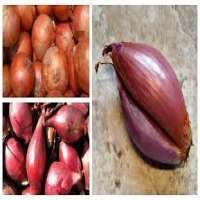 Shallots Onion Manufacturers