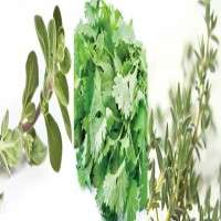 Culinary Herbs Manufacturers