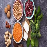素食蛋白质 制造商