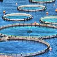 Aquaculture Cage Manufacturers