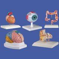 Laboratory Models Manufacturers