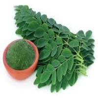 Moringa Leaves Manufacturers