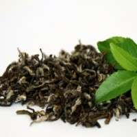 Organic Green Tea Manufacturers