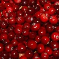 Cranberry Flavour Manufacturers