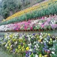 Seasonal Flower Manufacturers