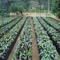 Plant Nursery Manufacturers