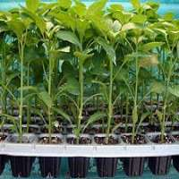 Agricultural Tray Manufacturers