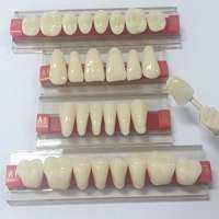 Acrylic Teeth Manufacturers