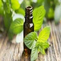 Peppermint Oil Manufacturers