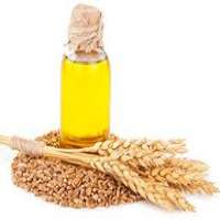 小麦胚芽油 制造商