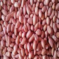 Peanut Kernel Manufacturers