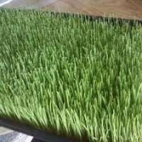 Animals Fodder Manufacturers