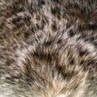 Animal Hair Manufacturers
