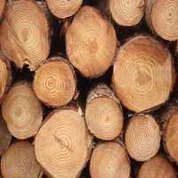 松木原木 制造商