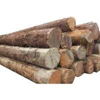 Timber Logs Manufacturers