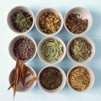Medicinal Herbal Tea Blends Importers