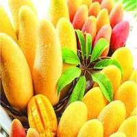 Mango Manufacturers
