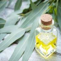 Eucalyptus Oil Manufacturers