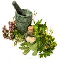 Aromatic Plants Manufacturers