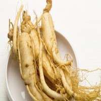 Panax Ginseng Importers