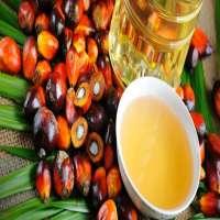 棕榈油 制造商