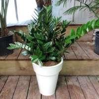 Foliage Plant Manufacturers