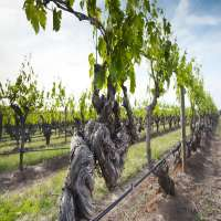 Vine Manufacturers