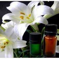 Ginger Lily Oil Manufacturers