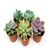 Succulent Plant Manufacturers