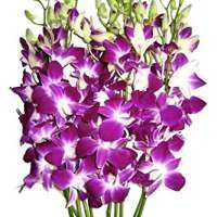 Dendrobium Orchid Flower Manufacturers