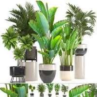 Ornamental Plants Manufacturers