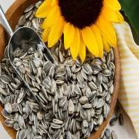 葵花籽 制造商